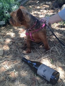 Paradox dog friendly wineries Coco Simply Driven